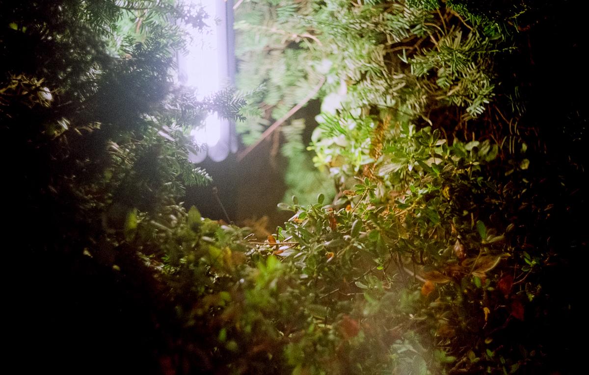 사진. 빛나는 조명 아래 소용돌이치는 관엽.