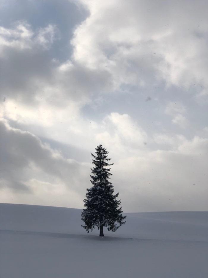설원 위의 나무 사진.
