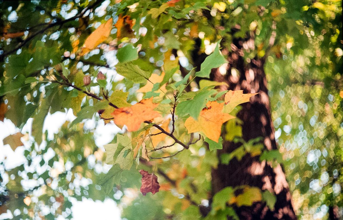 사진. 가을의 시든 나뭇잎.