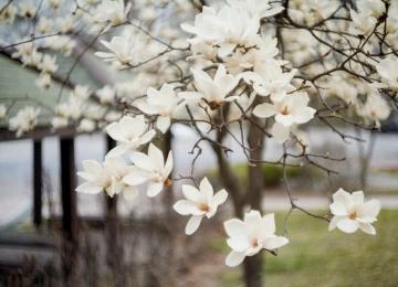 [117호][이달의 사진] 그래도, 봄
